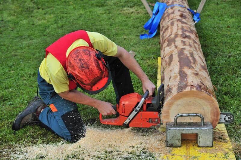 Tree Surgeon Colchester | Tree Removal and Cutting Services